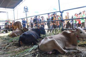 Cegah Wabah Antraks, Dinkes Jabar Lakukan Operasi Pasar